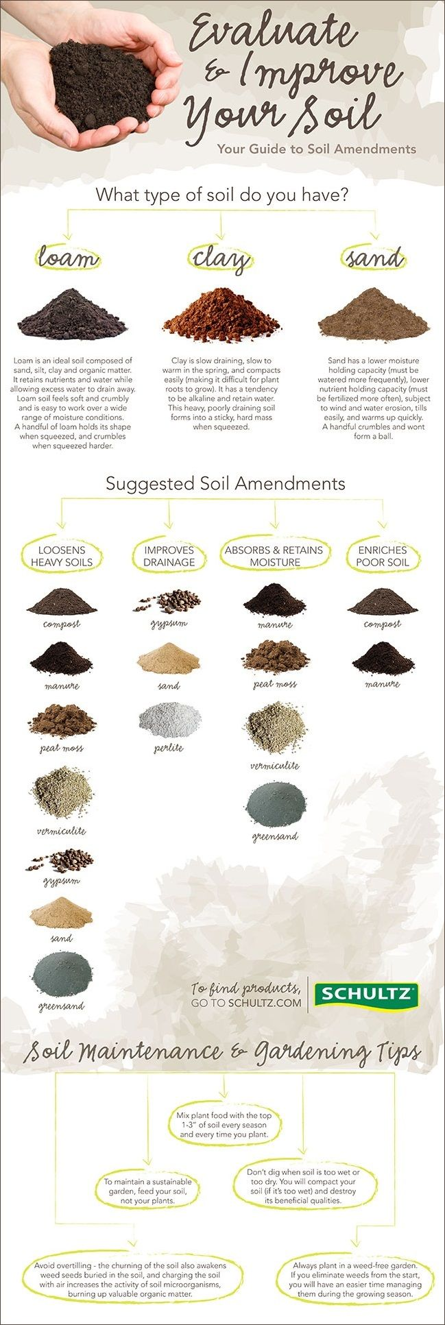 coriander planting guide type of soil
