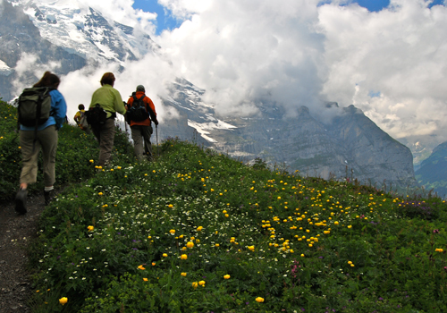 jungfraujoch tour or self guided