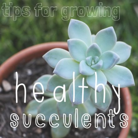 guide to propagating succulents from leaves and cuttings